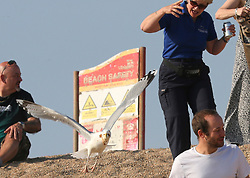 "© Licensed to London News Pictures. 20/04/2019. West Bay, UK.  A gull steals ice cream form the hand of Carol Vincent while on West Bay Beach on Dorset, south west England. After losing the ice cream, Carol said "" I only had 3 licks and it was gone."".  Photo credit: Jason Bryant/LNP"