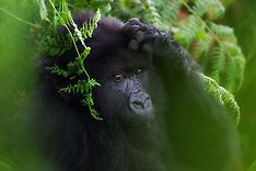 Rwanda #1 2010