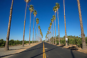Straight flat newly paved road  with palm trees and Orange groves on either side.