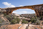 Owachomo Natural Bridge is in Natural Bridges National Monument, near Blanding, San Juan County, Utah, USA. Owachomo Natural Bridge is an old natural bridge which was eroded through a meander of white Permian sandstone of the Cedar Mesa Formation by a now-abandoned channel of Tuwa Canyon Creek. Owachomo Bridge has a laser-measured span of 180 feet and a height of 86 feet; with a width of about 27 feet and thickness of 9 feet.