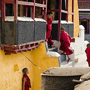 Young Buddhist monks called by a senior during a break in the morning ceremony (puja) at Thiksey Monastery, Ladakh, India