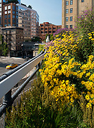The High Line, NY, USA