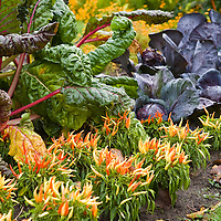 Edible Landscaping-Foodscapes