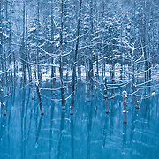 Blue Pond in Biei, Hokkaido, Japan in the winter, with snow falling. The pond is manmade, and the trees growing through the water are Japanese larch (Larix kaempferi), deciduous conifers. 北海道の美瑛にある青い池です。