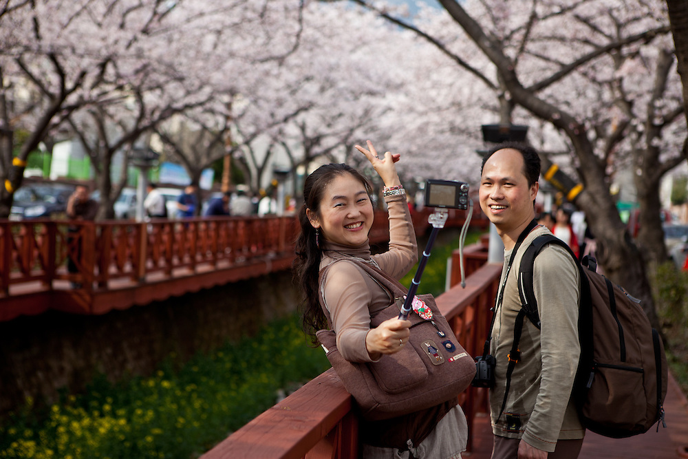 Couple photographing themselves with a camera on tripod at  the famous cherry blossom festival in  Jinhae located in the Gyeongsang province.