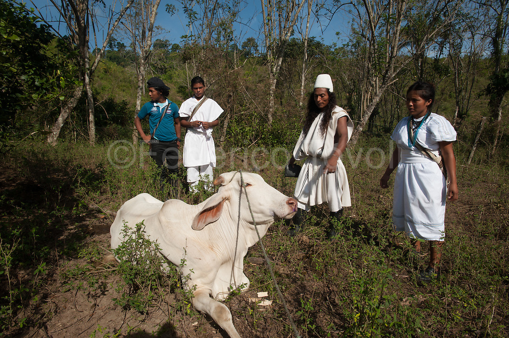 "In the Arhuaco village of Bunquimaque students of the ""secondary"" learn animal husbandry techniques that will be useful to them in places such as the Sierra Nevada de Santa Marta, where it lives on agriculture and almost self-consumption."