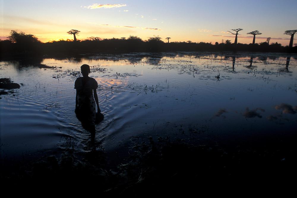 """A farmer wades effortlessly through a shallow lake near the """"Avenue des Baobabs"""", Morondava."""