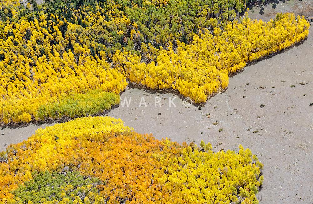 Southeast of Westcliffe, Colorado, aspen in fall