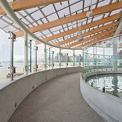 Marine Mammal Center at the New England Aquarium, interior view toward Fan Pier and Moakley US Courthouse. Boston Massachusetts  .Architect McManus Architects, Inc. Cambridge, MA
