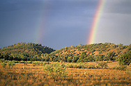 Red Kangaroo, Macropus rufus.Rainbow.Flinders Ranges Natl. Park.South Australia.Australia
