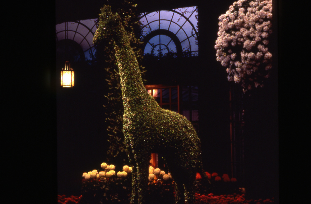 Longwood Garden conservatory, giraffe topiary, mum festival, Chadds Ford, PA