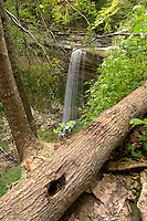 Tunnel Falls at Clifty Falls State Park, Indiana