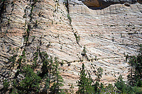 Rock patterns Zion National Park, located in the Southwestern United States, near Springdale, Utah.
