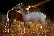Two Mustangs Grooming