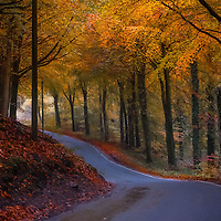 road winding through autumn woodland with autumnal colours