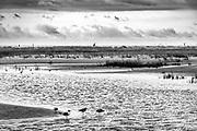 Tide pool composition at Ocean Isle Beach, NC.