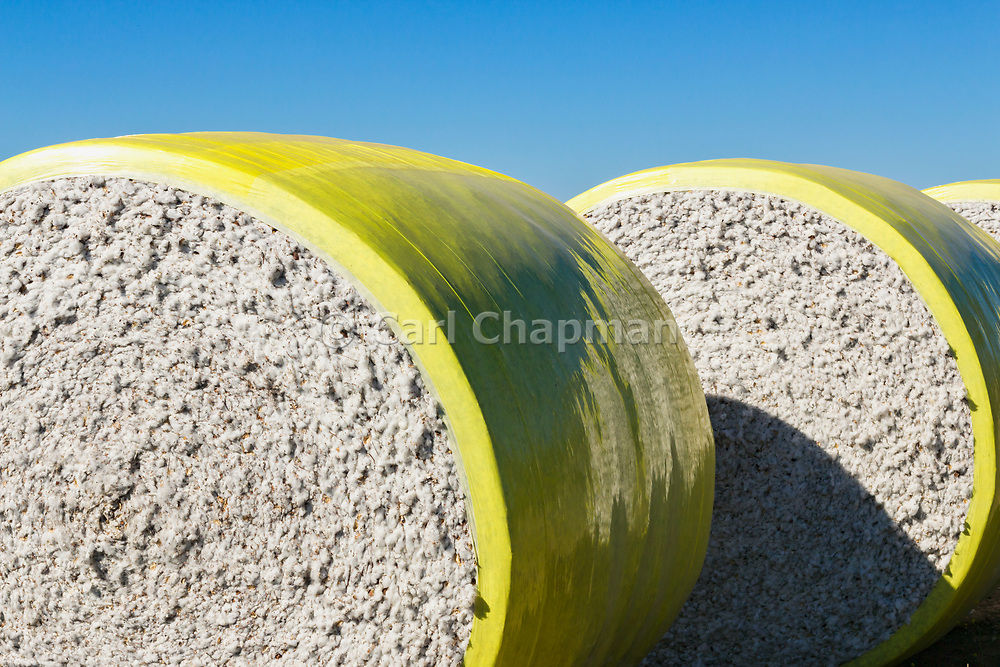 Round cotton bales in field after harvest near Toobeah, Queensland, Australia. <br /> <br /> Editions:- Open Edition Print / Stock Image