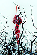 a red umbrella with white polka dots is hanging from a dead tree