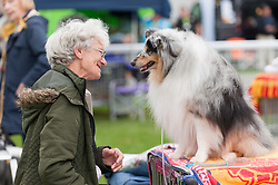 © Licensed to London News Pictures. 18/08/2018. Llanelwedd, Powys, UK. Dorothy converses with her Shetland Sheepdog Brett on the second day of The Welsh Kennel Club Dog Show, held at the Royal Welsh Showground, Llanelwedd in Powys, Wales, UK. Photo credit: Graham M. Lawrence/LNP