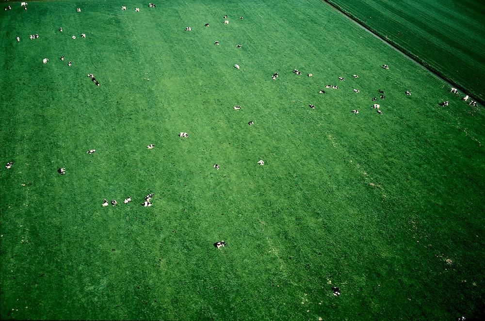 Nederland, Gelderland, Tilerwaard, 04-04-2002;  zwart-bonte koeien in de wei (Fries stamboekvee, Holsteiners), melkvee, melk, zuivel, landbouw, veeteelt, weiland, veenweide, polder, gras, groen. Veeteelt.<br /> luchtfoto (toeslag), aerial photo (additional fee)<br /> photo/foto Siebe Swart