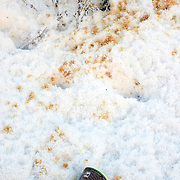 Noorwegen Gol 31 december 2008 20081231 Foto: David Rozing .Wintertafereel, afval vervuiling in sneeuw koffie vlekken.Wintertime, pollution coffee..Foto: David Rozing