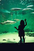 Jenkin's Aquarium, Point Pleasant.