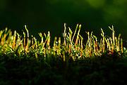 Moss on oak trunk. Kaltenhofer Moor, Kiel, Germany