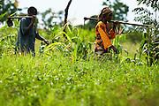 Sweet potato farmer Mwanaidi Ramadhani and fellow farmers walk through a field as they head to a farm run by a local farmer's group in the village of Mwazonge, roughly 30km southwest of Mwanza, Tanzania on Sunday December 13, 2009.