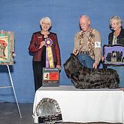 Skye Terrier Club of America 2018