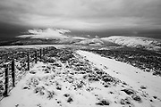 Looking east towards Windy Gyle from Mozie Law (552m).