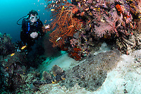 Diver and Tasseled Wobbegong.Shot in West Papua Province, Indonesia