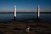 A dog in Cais das Colunas, Terreiro do Paco, by the river Tagus, Lisbon