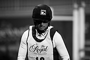 Michael Jung (GER) rides Cruising Guy in the Horseware Indoor Eventing challenge at The Royal Horse Show, TORONTO, CANADA.  November 4 2016