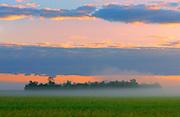 Canola field at dawn<br /> Fairview<br /> Alberta<br /> Canada