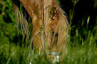 Photographs of Horses