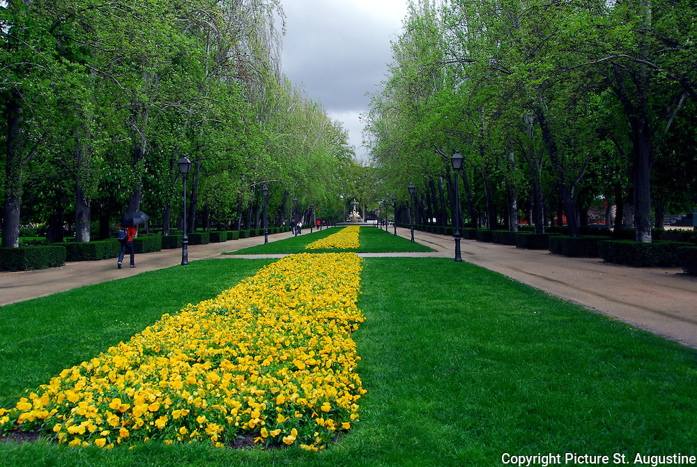 On a rainy spring day yellow flowers brighten the gardens of a Park  in Madrid, Spain. The flowes, grass, sidewalks, trees and sky lend an interesting perspective to the scene.