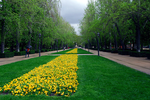 On A Rainy Spring Day Yellow Flowers Brighten The Gardens Of A Park In  Madrid,