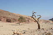 Israel, Eilat Mountains, Wadi Amram
