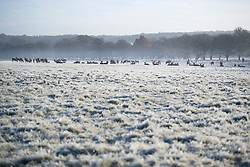 © Licensed to London News Pictures. 19/12/2017. London, UK. Deer graze in freezing temperatures at sunrise Richmond Park in west London as freezing fog hits the capital city. The Met Office has issued weather warnings for freezing fog in parts of the UK, with cancellations expected at Heathrow Airport. Photo credit: Ben Cawthra/LNP