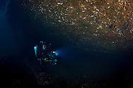 Diver Ian Skipworth on the wreck of the Waikare 1910 at Stop Island, Dusky Sound, Fiordland. Friday 04 April 2014<br /> Photograph Richard Robinson &copy; 2014<br /> Dive Number: 514<br /> Site: The Wreck of the Waikare 1910, Stop Island, Dusky Sound, Fiordland.<br /> Boat: Tutoko<br /> Dive Ian Skipworth<br /> Time: 15:43<br /> Temperature:  14.8<br /> Rebreather: Inspiration Vision. Total Time On Unit: 315:49 hh:mm<br /> Maximum Depth: 18.3 meters<br /> Bottom Time: 122 minutes<br /> Mix: 21<br /> CNS: 40%<br /> OTU: 38%<br /> Bottom Time to Date: 34,682 minutes<br /> Cumulative Time: 34,804 minutes