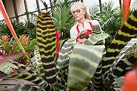 Senior female gardener working in greenhouse