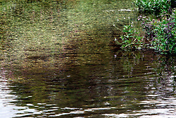 UK ENGLAND HAMPSHIRE ST MARY BOURNE 12AUG06 - Example of unnatural sediments originating from the Vitacrest salad washing plant polluting the Bourne river near St. Mary Bourne, Hampshire...jre/Photo by Jiri Rezac..© Jiri Rezac 2006..Contact: +44 (0) 7050 110 417.Mobile:  +44 (0) 7801 337 683.Office:  +44 (0) 20 8968 9635..Email:   jiri@jirirezac.com.Web:    www.jirirezac.com..© All images Jiri Rezac 2006 - All rights reserved.