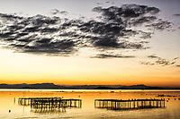 Criação de ostras ao por do sol na Praia do Ribeirão da Ilha. Florianópolis, Santa Catarina, Brasil. / Oyster farm at Ribeirao da Ilha Beach at sunset. Florianopolis, Santa Catarina, Brazil.