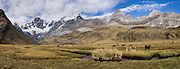 """Horses at Tuctucpampa campground stream below Nevado Jirishanca (left, """"Icy Beak of the Hummingbird"""" 6094 m), Rondoy (center 5870 m). Day 2 of 9 days trekking around the Cordillera Huayhuash, in the Andes Mountains, Peru, South America. This panorama was stitched from 3 overlapping photos."""