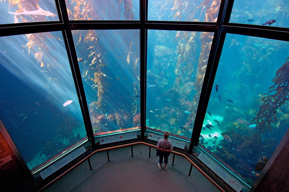 Monterey Bay Aquarium, Monterey, California, United States of America