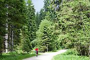 Radler im Schmalzbachtal, Zwieseler Waldhaus, Bayerischer Wald, Bayern, Deutschland |Schmalzbach, Zwieseler Waldhaus, Bavarian Forest, Bavaria, Germany