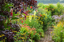 Hot borders in the brick garden at Glebe Cottage with crocosmia, gladiolus, rudbeckia, dahlias and Cotinus coggygria Purpureus Group. Brick path
