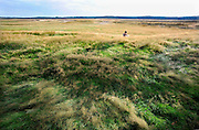 Nederland, Ede, 5-8-2012Vrouw zit in het gras op de Ginkelse Heide uit te rusten.Het is een mooi natuurgebied waar mensen een wandeling door de heidevelden kunnen maken.Foto: Flip Franssen/Hollandse Hoogte