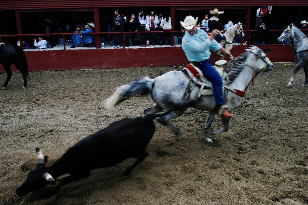 Coleadero, the most popular suerte, is sometimes singled out for an afternoon of practice or informal competition.  At Rodeo Los Corrales in Comfort, Texas, charros pay $20 for a run at three steers.