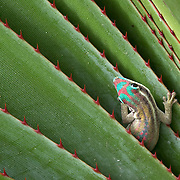 Mauritius Endangered Species